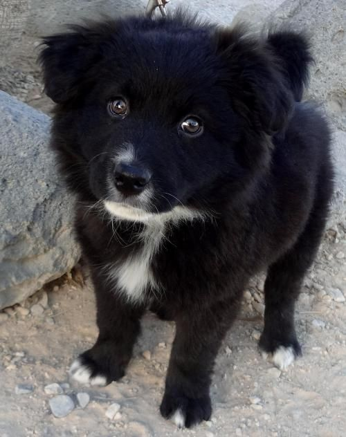 Pin By Doggielifecom On Wwwdoggielifecom Pomeranian Mix Dogs
