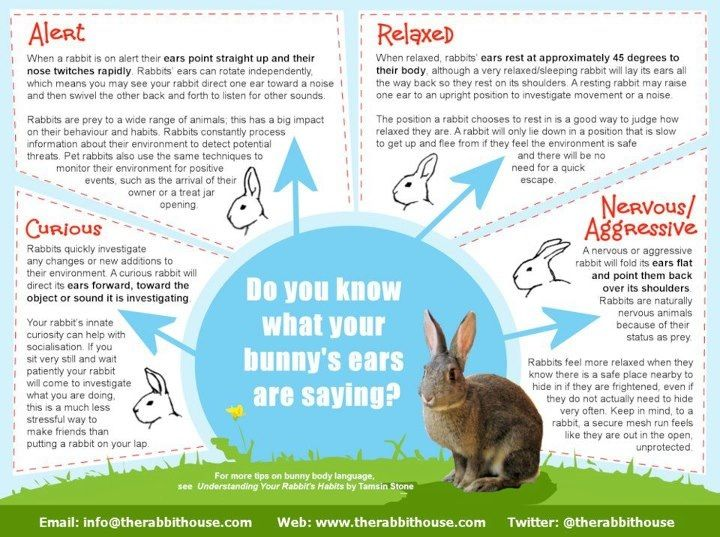What a Rabbits ear position means  | Animals and things