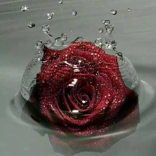 صور حب رومزيات رومانسية Love Romantic