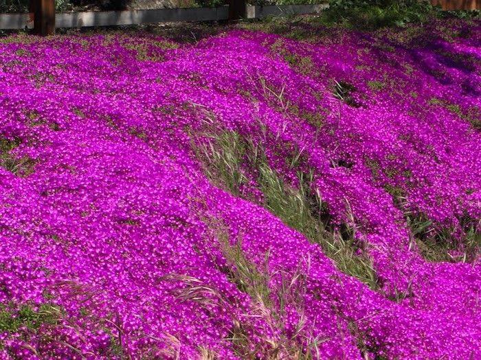plante couvre sol - un tableau de couleurs naturelles dans votre