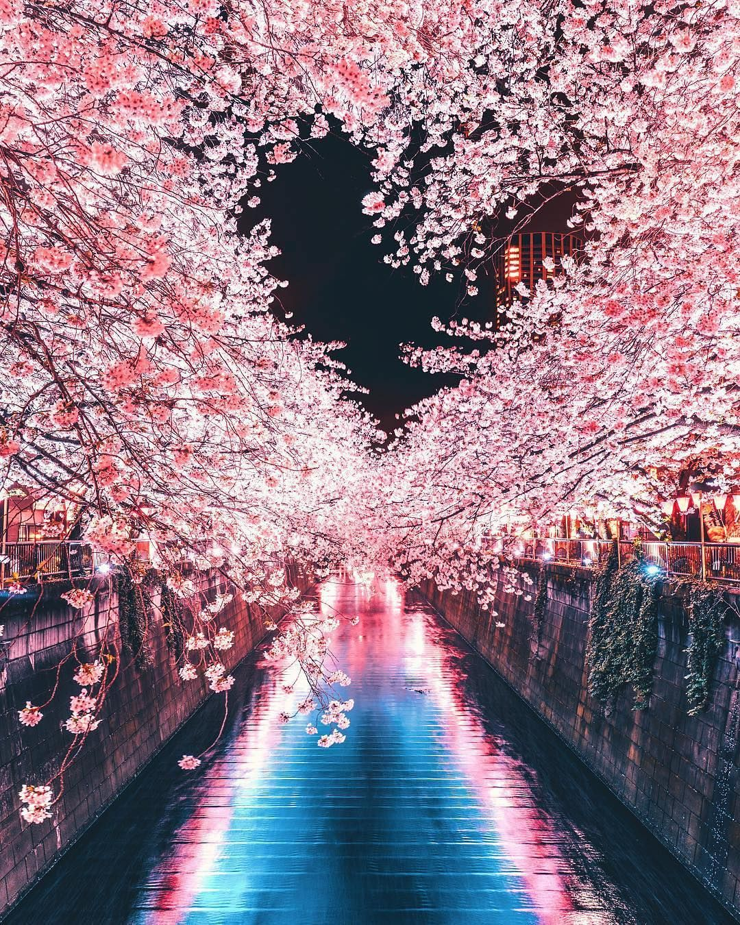 A Lovely Spring Cherry Blossom Coming To An End Here In Tokyo Nakameguro Tokyo Beautiful Nature Nature Photography Beautiful Landscapes