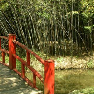 Mandarin bridge