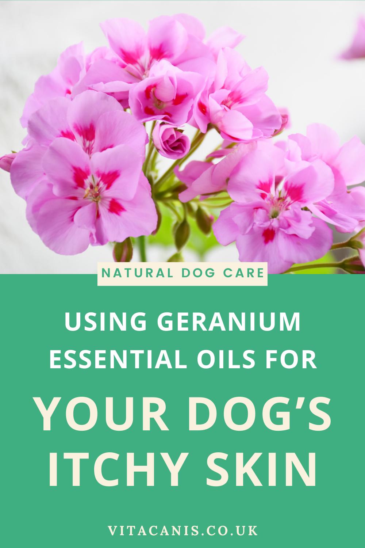 Geranium is Magical in 2020 Dog skin problem, Dog skin