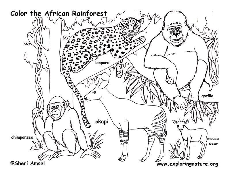 African Rainforest Animals Coloring Page Sketch Coloring Page Jungle Coloring Pages Animal Coloring Pages Animal Coloring Books