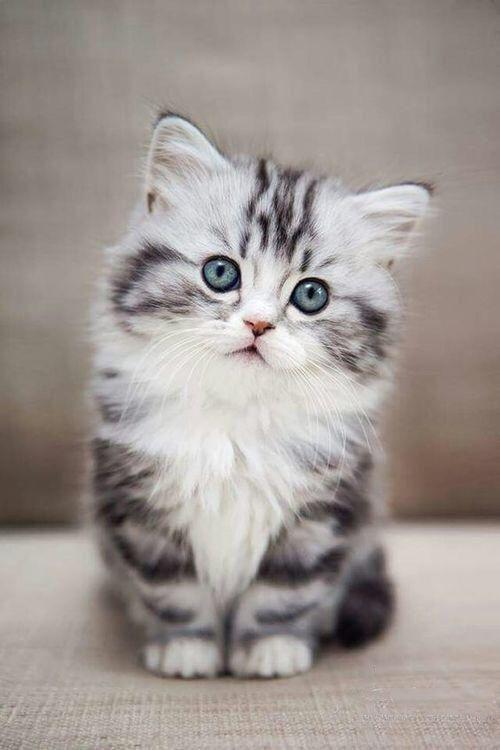 #BELIEBTESTEN  #cat  #DER  #EINES  #FAMILIENHAUSTIERE  #ist  #Sciliy  #Seite  #Von #BELIEBTESTEN #FAMILIENHAUSTIERE CAT IST EINES DER BELIEBTESTEN FAMILIENHAUSTIERE - Seite 8 von 59 - Sciliy,