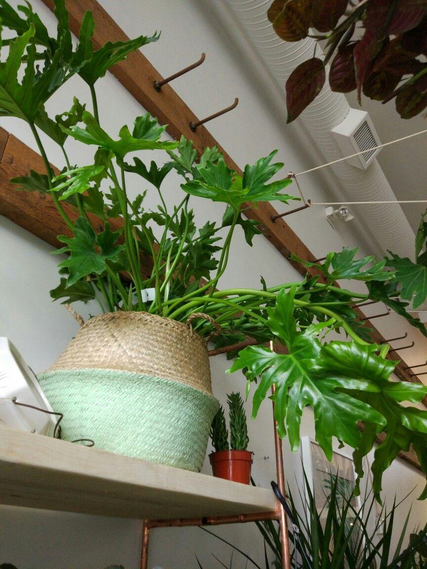 Pin by Emily Sneller on Crazy Plant Lady   Pinterest   Plants ...