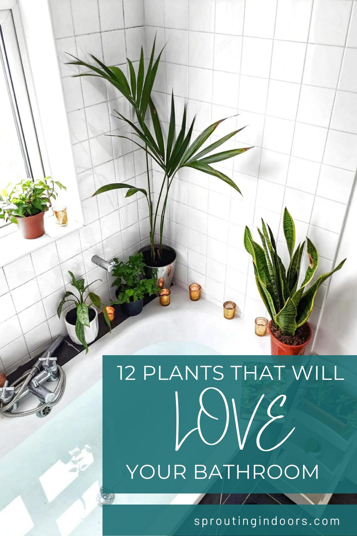 12 Houseplants That Will Love Your Bathroom Bathroom Plants Low Light Indoor Plants Low Light Low Light Plants