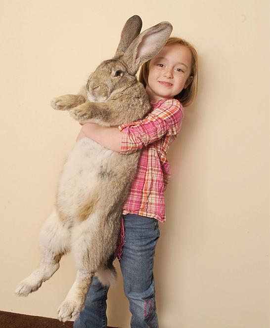 DARIUS BIGGEST BUNNY in the World - Babies for sale | World's biggest  rabbit, Cute animals, World's largest rabbit