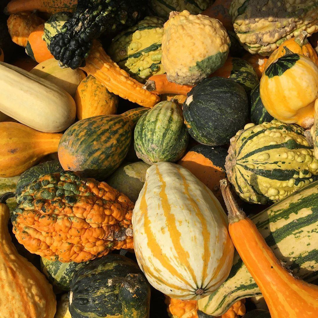 Kürbiszeit - Herbstzeit - Erntedank * * Pumpkin Time - Autum - Thanksgivin * *