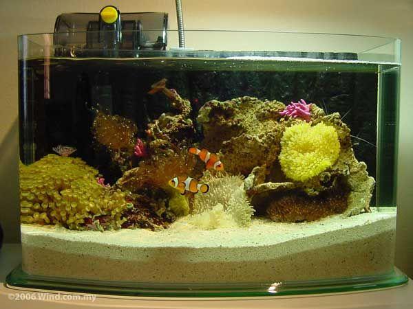 mini récif d'un aquarium d'eau de mer   aquariums   pinterest