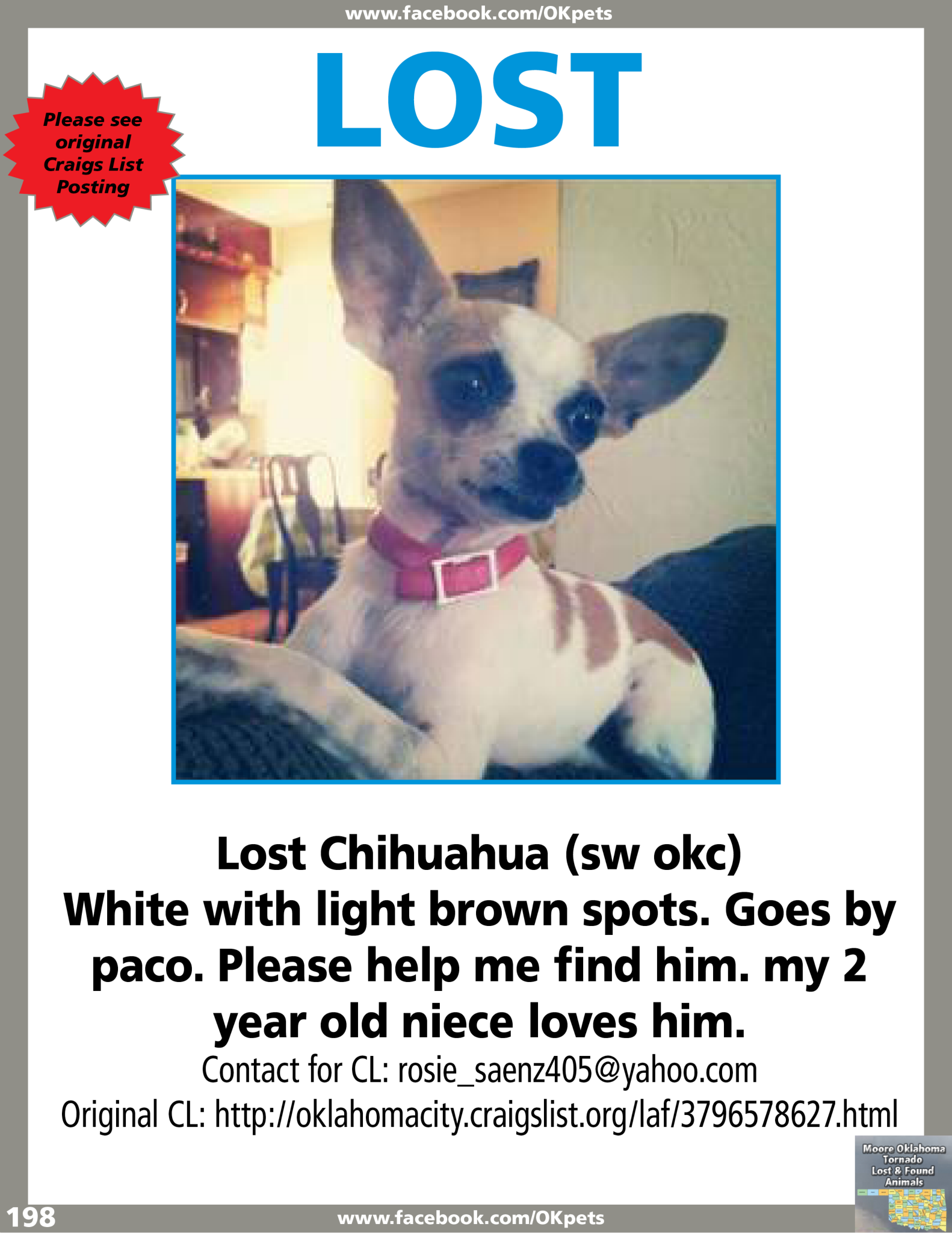 See Attached Flyer Fb Page Moore Oklahoma Tornado Lost And Found Animals Losing A Pet Chihuahua Pets