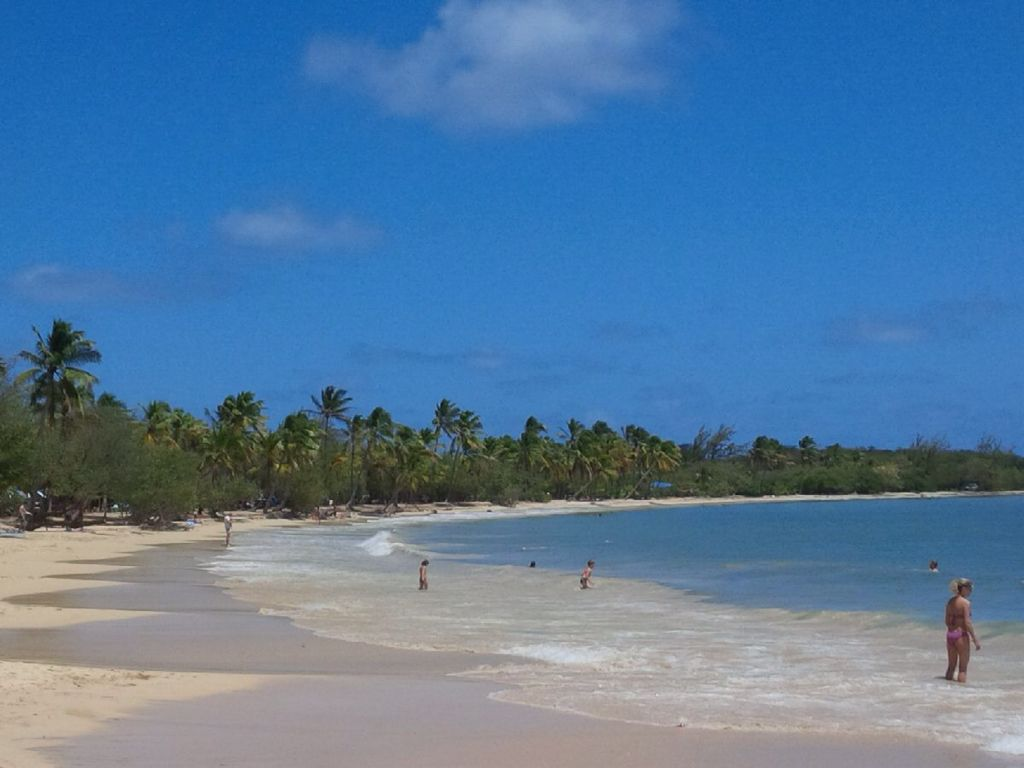Beautiful tropical, white Sandy beach Grande Anse des Salines in the south of Martinique.
