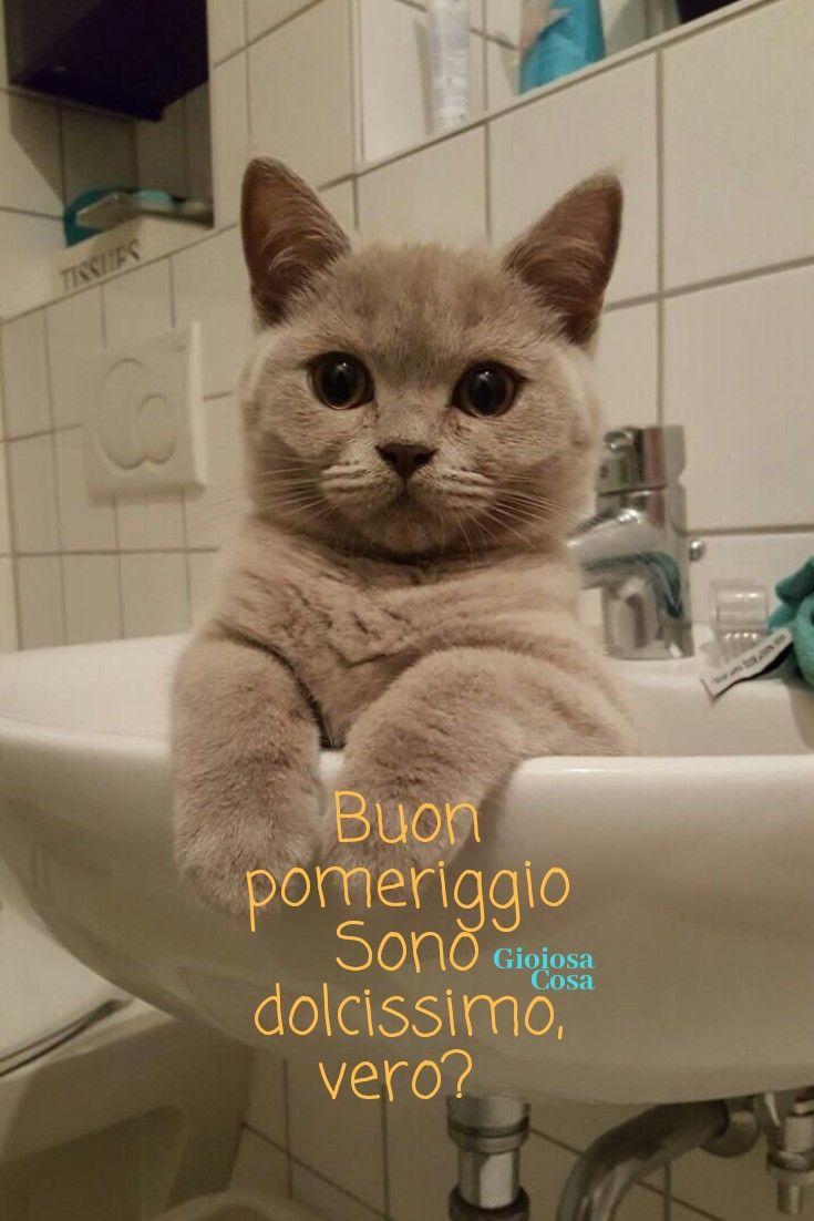 Buon pomeriggio con dolcezza da un cucciolo di gatto for Buongiorno con gattini
