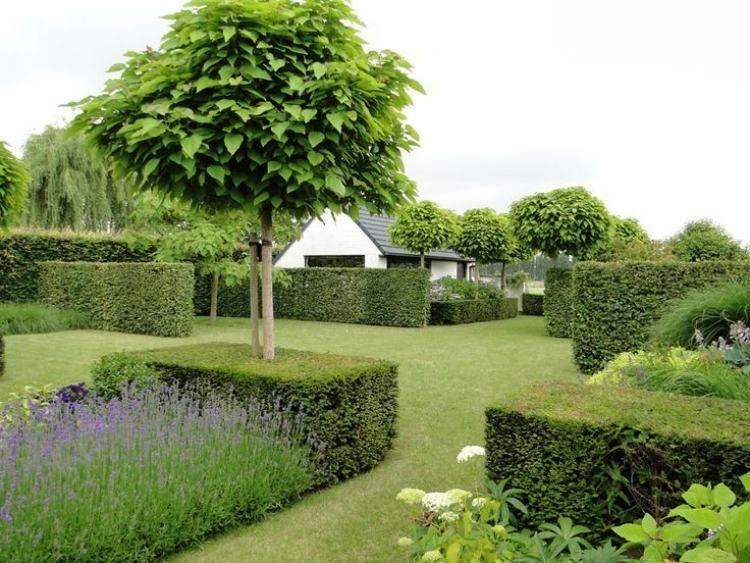 Arbre Pour Petit Jardin Les Varietes A Petit Developpement