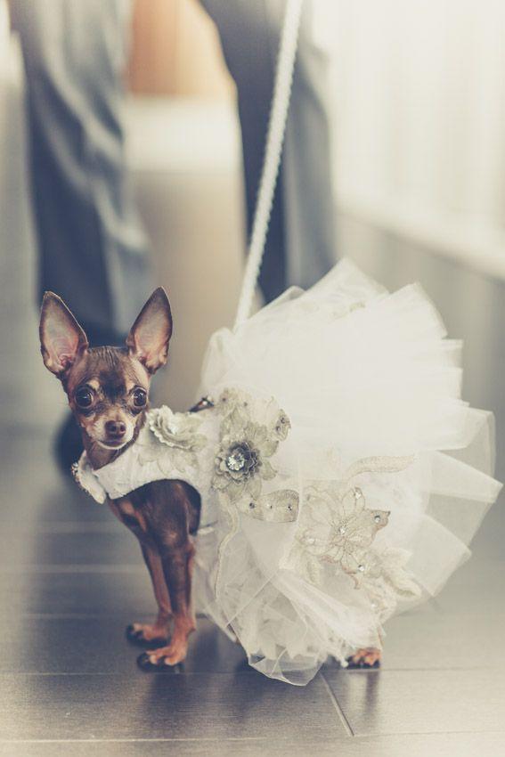 Published Wedding Photographer Toronto Dog Dressdogs