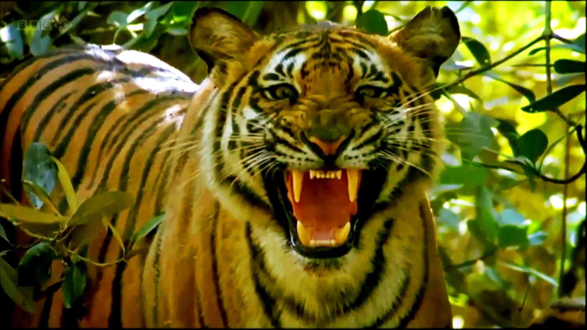 Our Living 1080p HD Wild animals videos, Animals