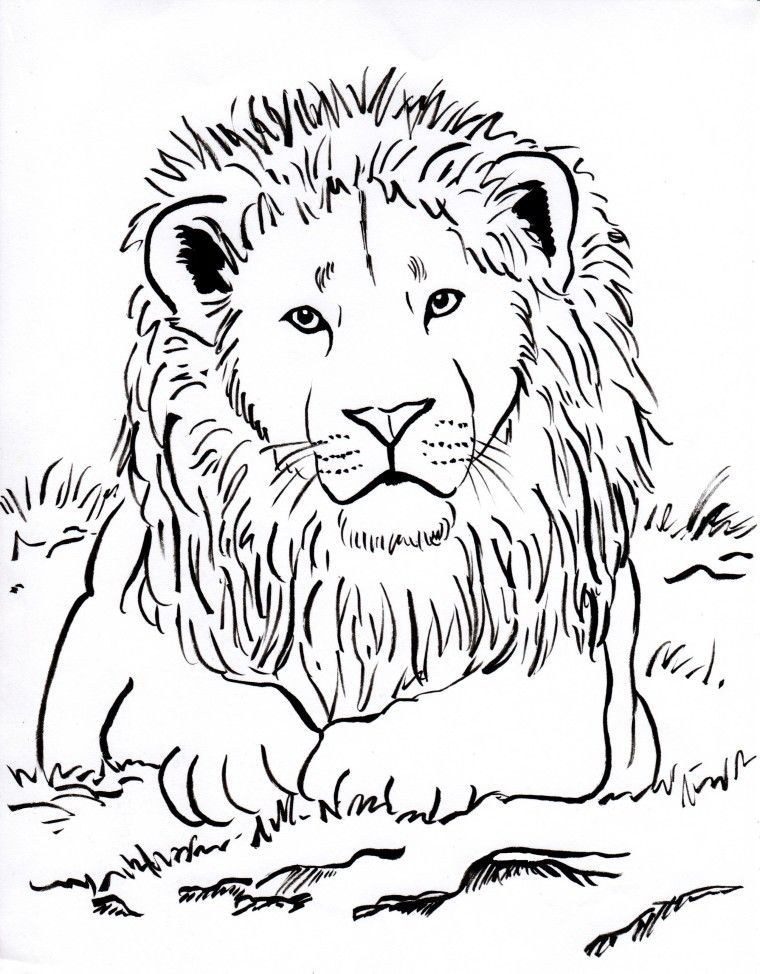 The Best Lion Coloring Pages Ideas For Kids Lion Coloring Pages