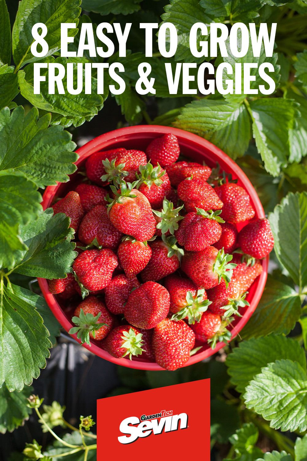 The Easiest Fruits And Vegetables To Grow For Beginners Fall Garden Vegetables Home Vegetable Garden Growing Vegetables