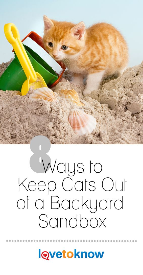 8 Ways to Keep Cats Out of a Backyard Sandbox in 2020 ...