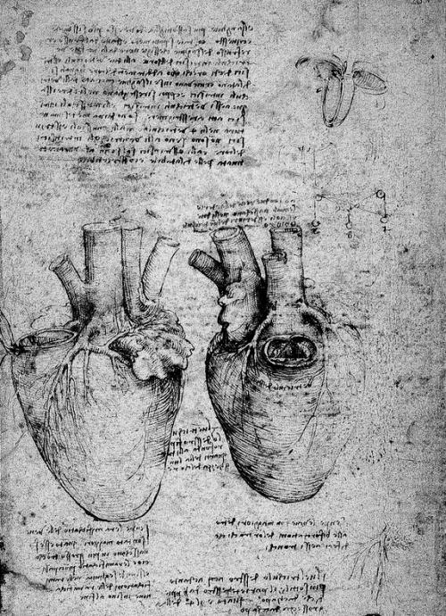 Leonardo Da Vinci Anatomy Heart Close Up In 2018 Pinterest
