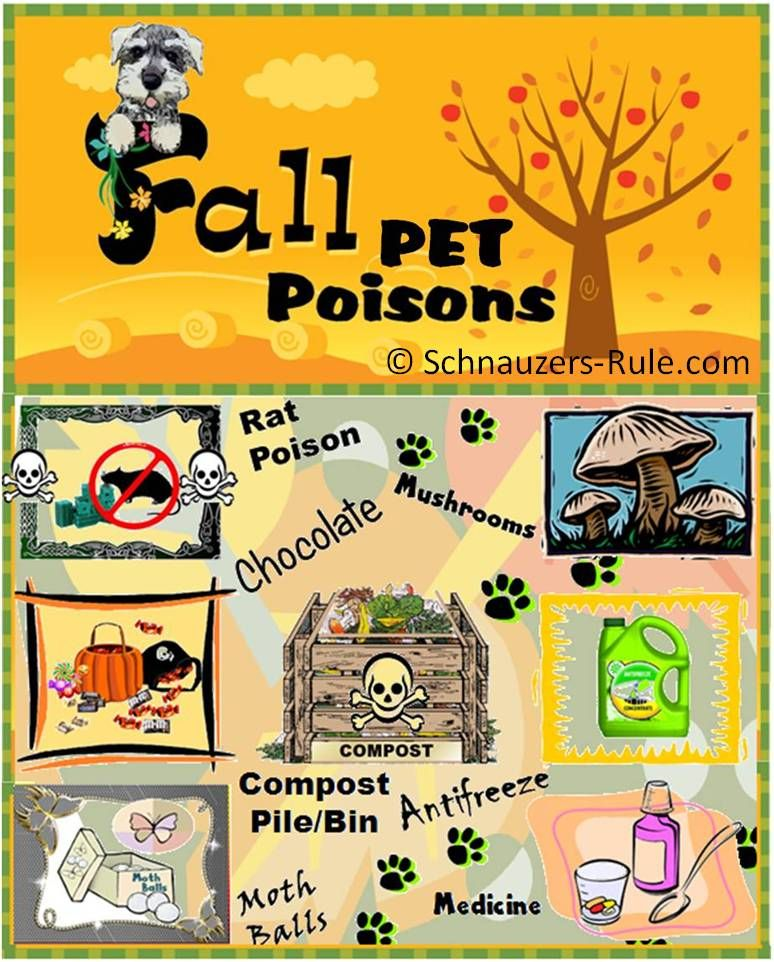 Fall Pet Poisons include Rat Poison, Mushrooms, Compost Piles or
