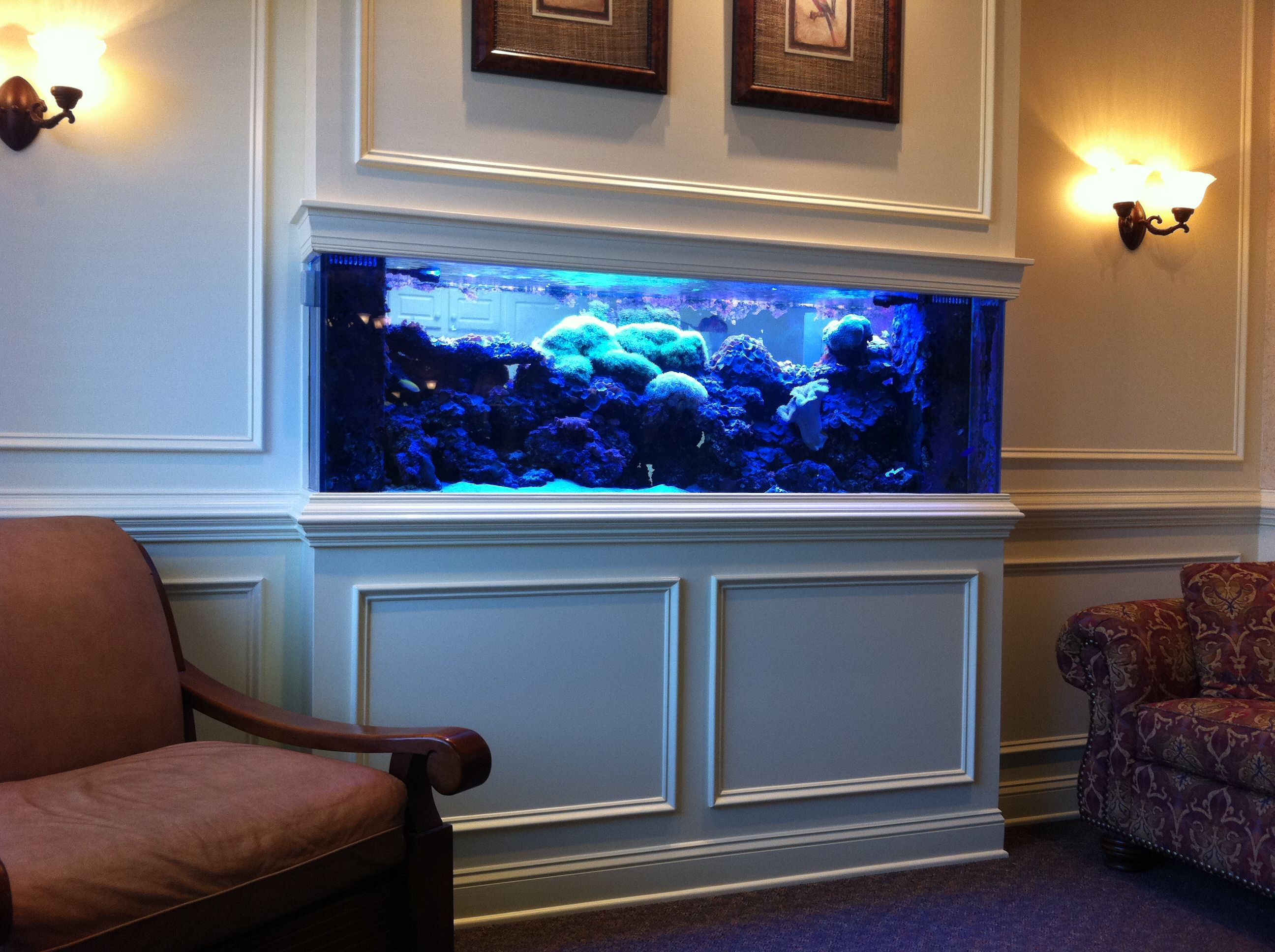 Saltwater aquarium fish google search ideas for the for Fish tank built into wall