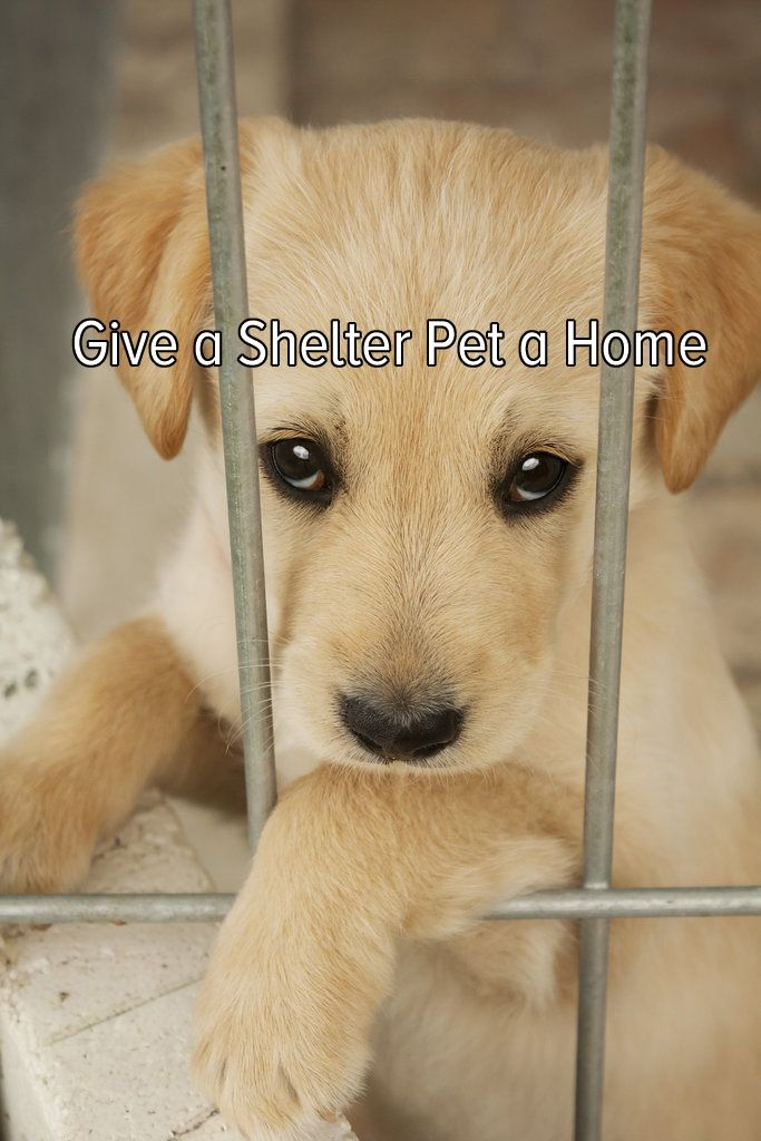 Give a Shelter Pet a Home Buckets and Sad