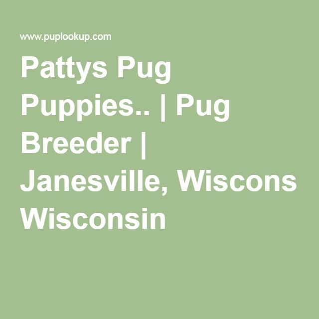 Pattys Pug Puppies   | Pug Breeder | Janesville, Wisconsin