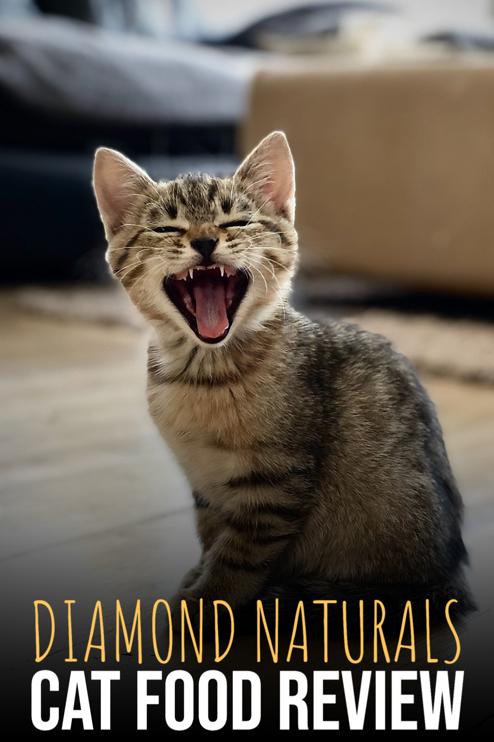 Diamond Naturals Cat Food Review In 2020 Natural Cat Food Cat Food Reviews Cat Food