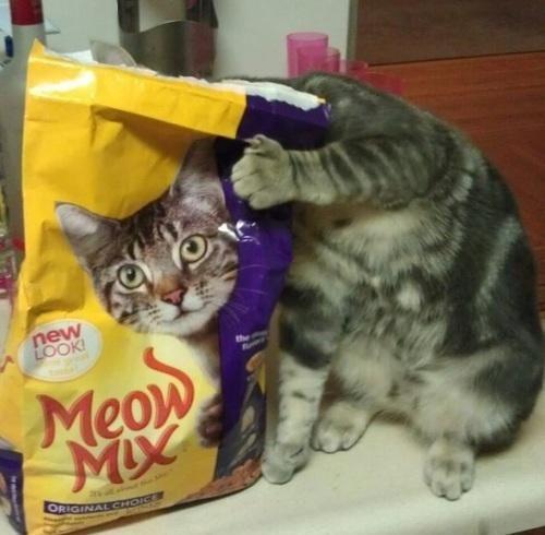 """""""Meooowww"""" = """"Miaouuhhh"""" ?"""