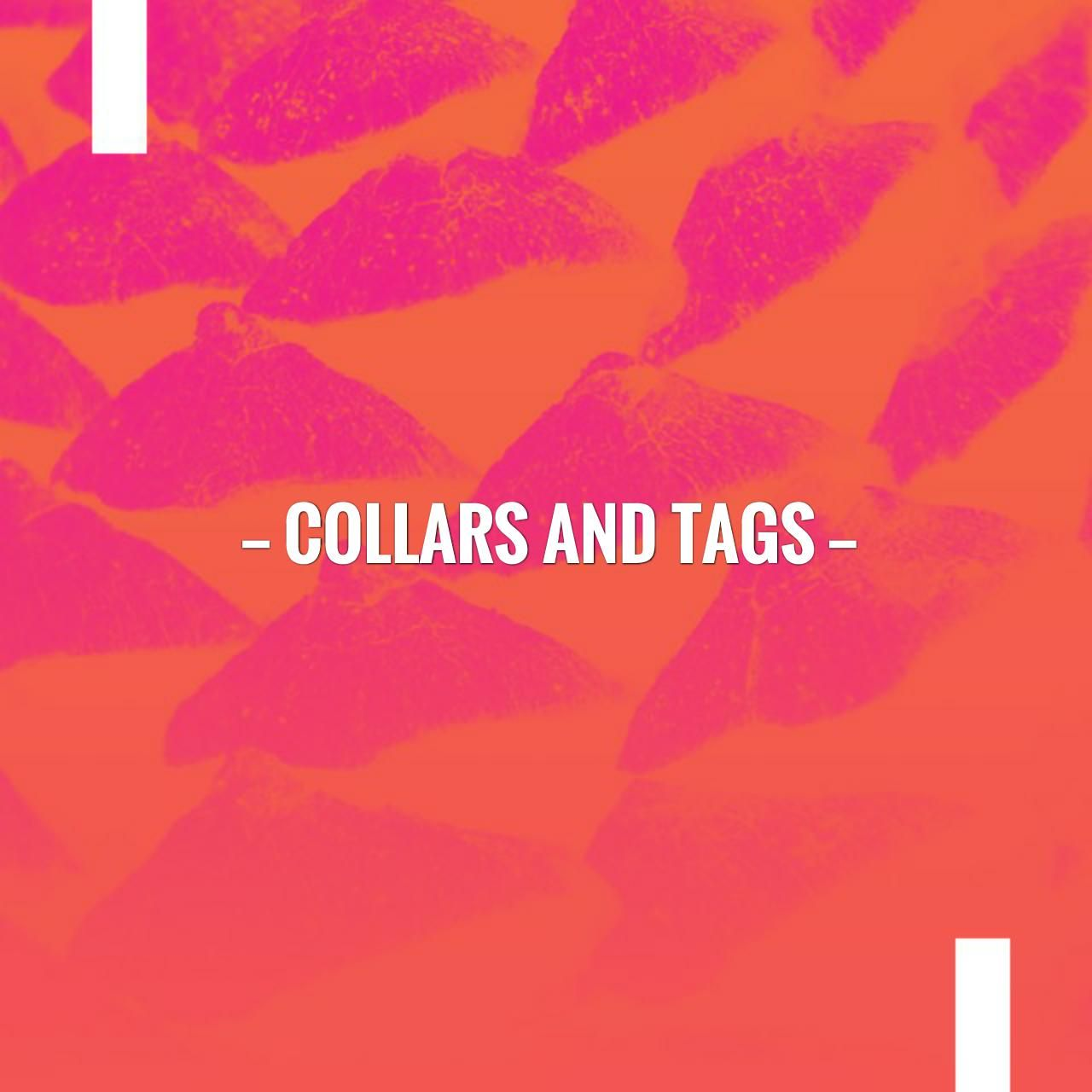 Collars and Tags First blog post, About me blog, Custom