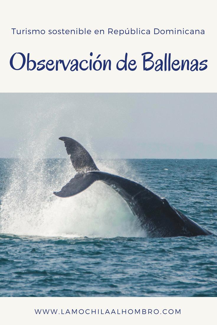 Descubre Cómo Hacer Turismo Y Al Mismo Tiempo Salvar A Las Ballenas Jorobadas Ballenas Republica Dominicana Tu Ballenas Turismo Sostenible Viajar En Pareja