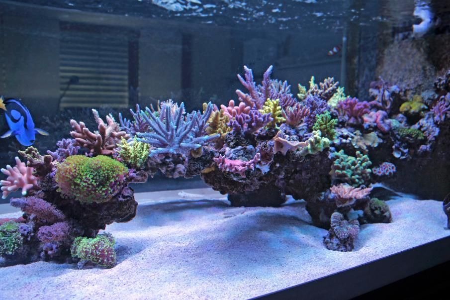 Show Off Your Large Tank Aquascape Reef Tank Aquascaping Saltwater Aquarium Saltwater Tank