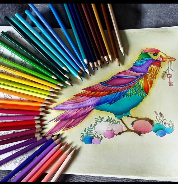 Bird Enchanted Forest Passaro Floresta Encantada Johanna Basford Enchanted Forest Coloring Book Enchanted Forest Coloring Johanna Basford Coloring Book