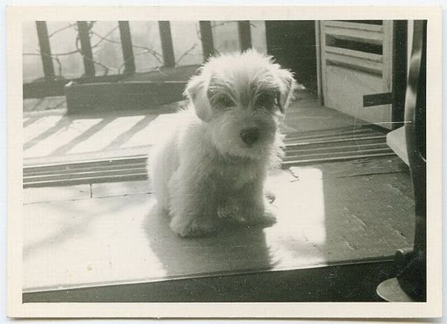 vintage dog photo ~what a sweetheart~