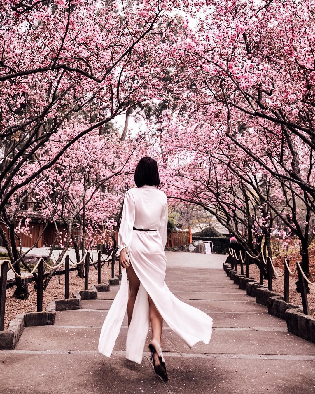 Catching The Last Of The Cherry Blossoms In Sydney Who Else Is A Spring Baby Spring Baby Cherry Blossom Blossom