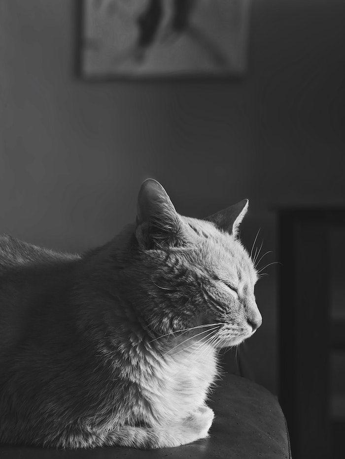 1001 Photos Pour Un Fond D Ecran Noir Et Blanc Parfait Pour Vous En 2020 Ecran Noir Et Blanc Paysage Noir Et Blanc Noir Et Blanc