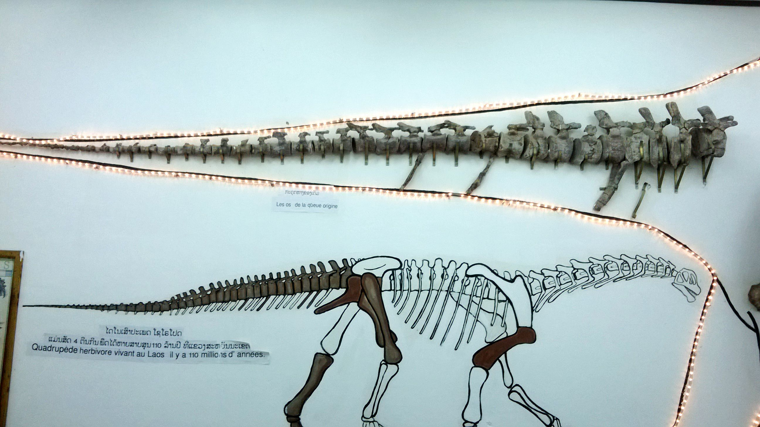 Image result for new species of dinosaur in laos