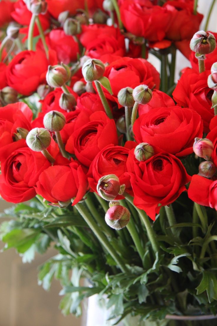 red flowers | Spectacular flowers and Heavenly gardens | Pinterest ...