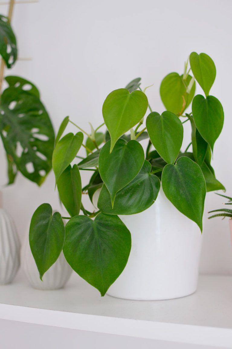 Rosliny Doniczkowe Zwisajace Pnace Rosliny W Moim Domu Plants Planter Pots Planters