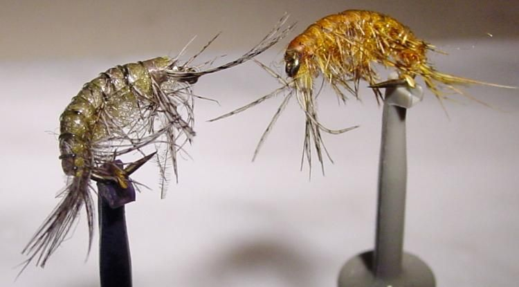 Scud Fly Tying Pinterest Fly Fishing Fly Tying And Fly Tying Beauteous Scud Fly Pattern