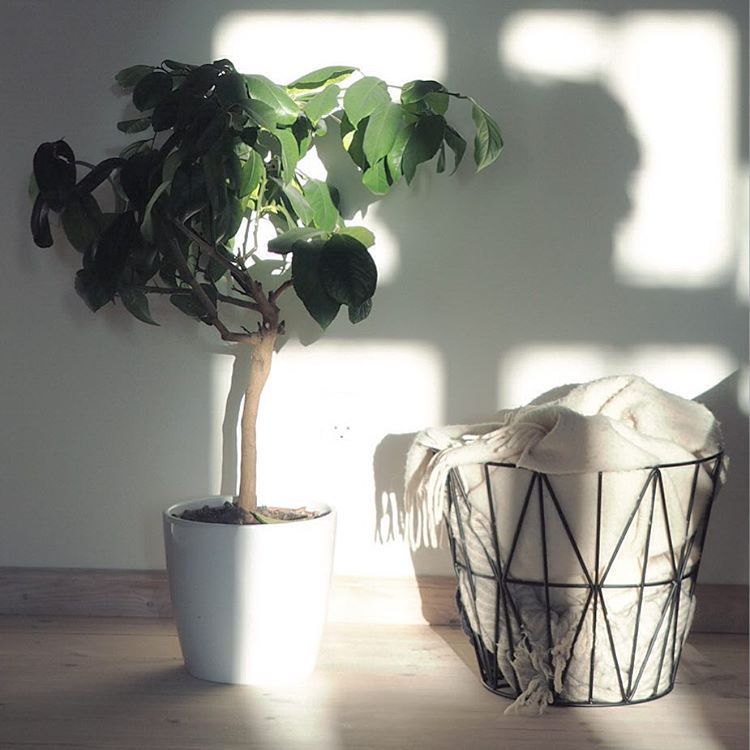 http://www.aitonordic.it/products/wire-basket-small-black-ferm-living