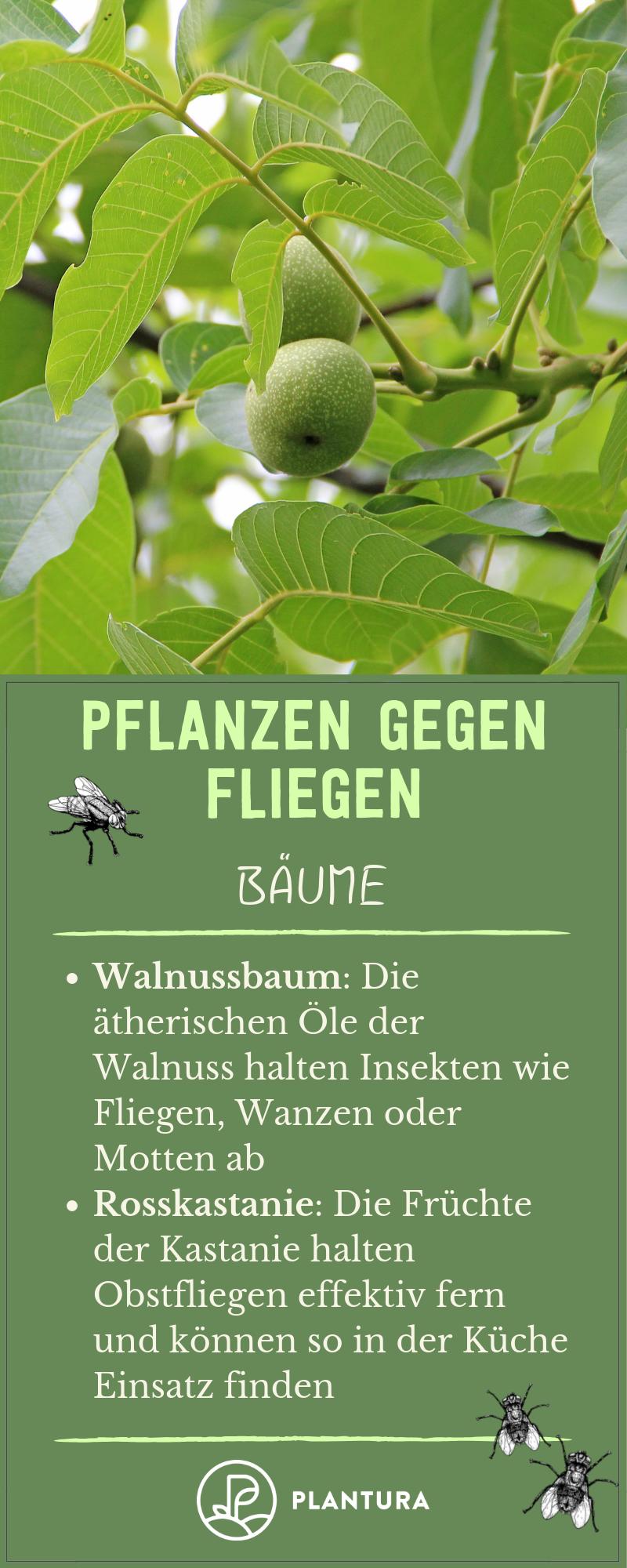 Pflanzen Gegen Fliegen So Vertreiben Sie Die Plagegeister Naturlich Pflanzen Gartentipps Pflanzenschutz