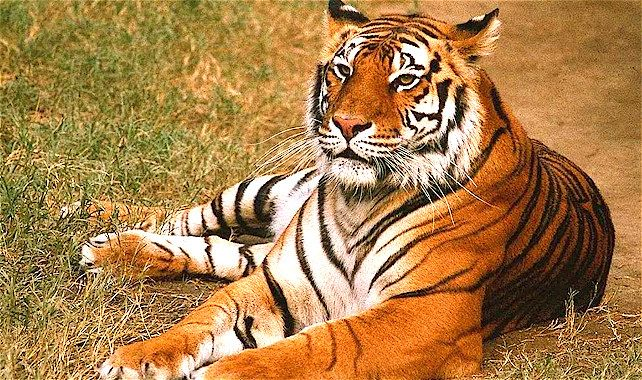 Tour Operator Jaipur Best Travel Agent Xclusive