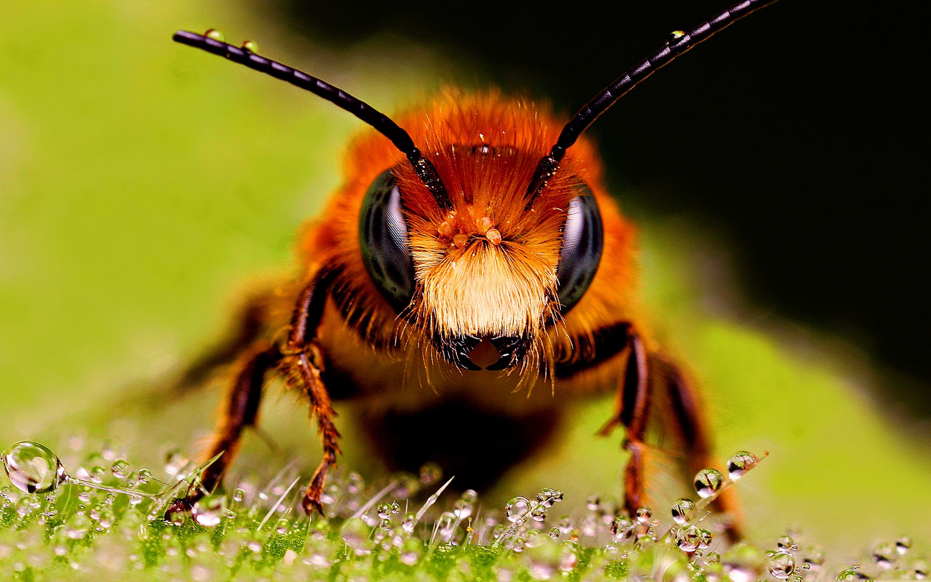 Bee Wallpapers Hd Hd Wallpapers Bee, Bee images, Insects