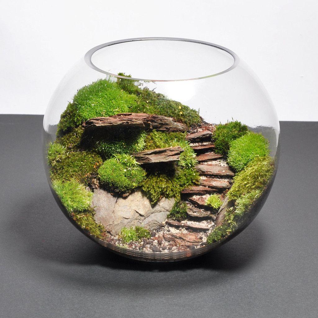 Biosphere terrarium steps terrariums pinterest for Decoration jardin japonais miniature
