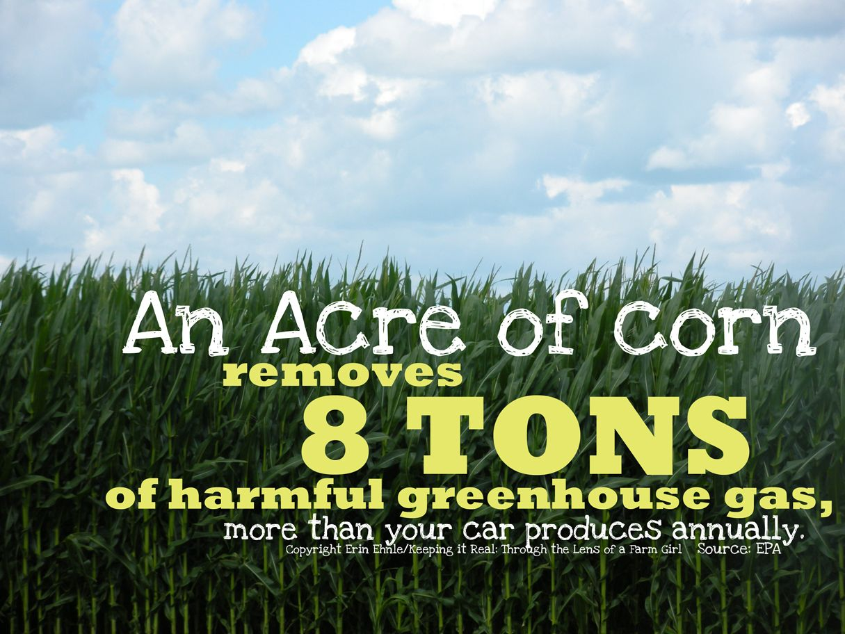 Farm Life Quotes Corn Fields Remove Harmful Greenhouse Gas  Life In Agriculture