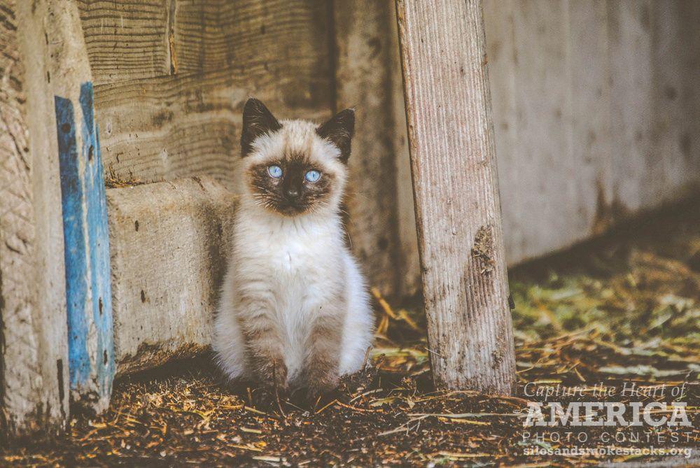 Barn Cat Cats, Animals, Photo contest