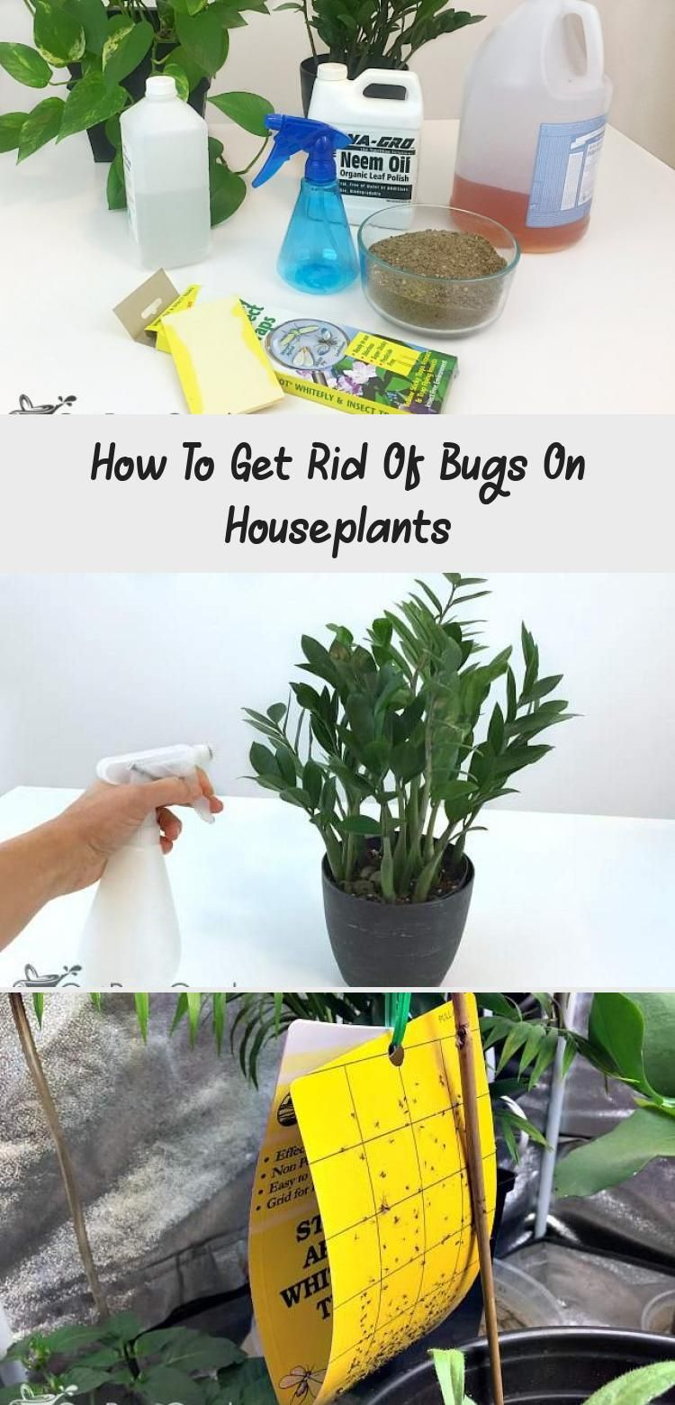 How To Get Rid Of Bugs On Houseplants in 2020 Plant