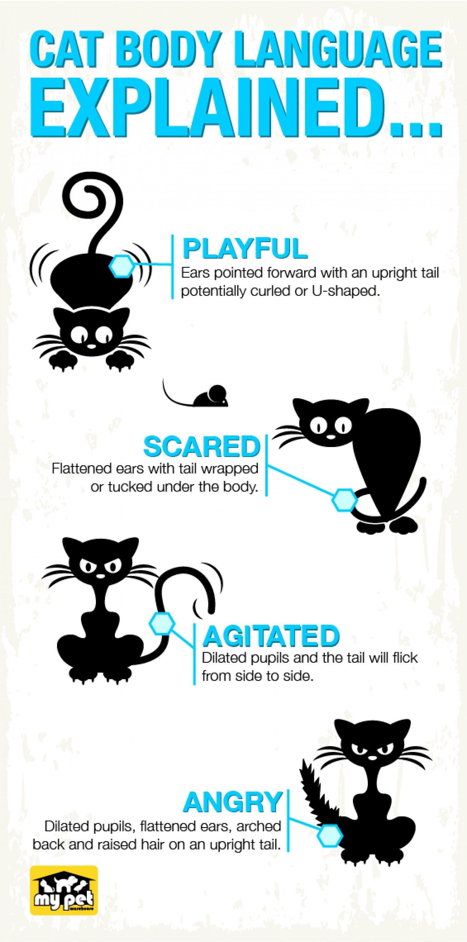 Cat body language Infographic Cat body, Cat language
